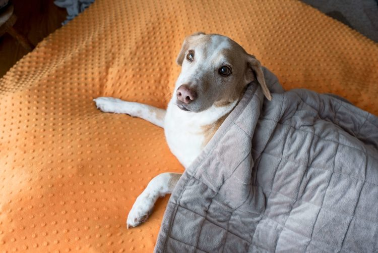 How A Weighted Blanket Can Help With Night Terrors